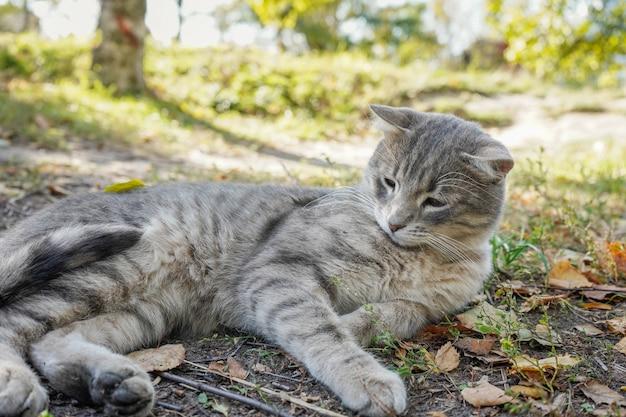 Портрет серого кота, который лениво лежит в траве.