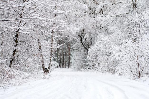 雪に覆われた落葉性の冬の木と不思議の国の冬の森