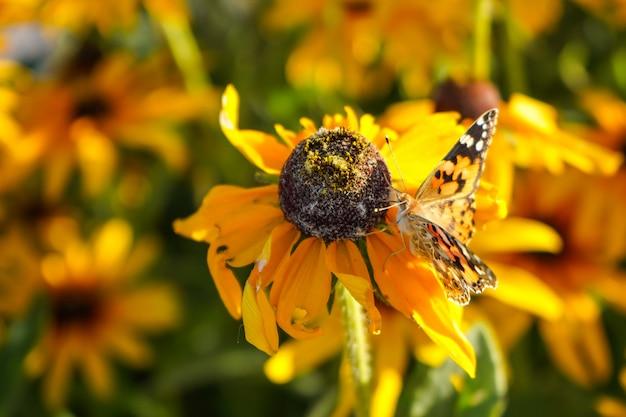 花の上に座って明るい蝶。閉じる