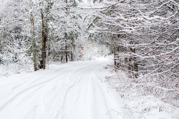冬の風景-雪に覆われた落葉樹の冬の木と不思議の国の冬の森。森の中の冬の道