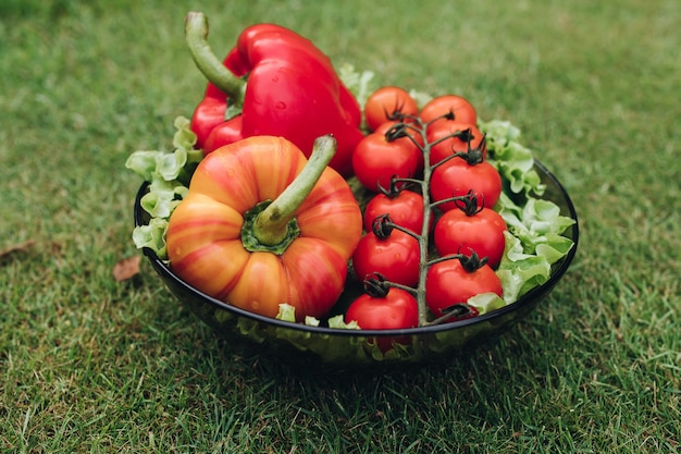 日当たりの良い夏の日のフルショットで緑の芝生の上のプレートで新鮮な食欲をそそる野菜のいくつか
