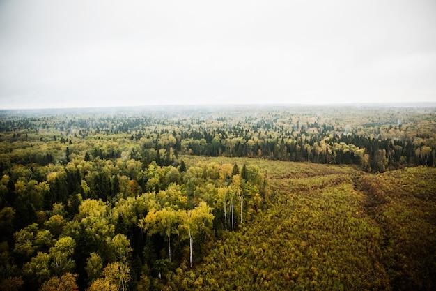 空気から自然の写真
