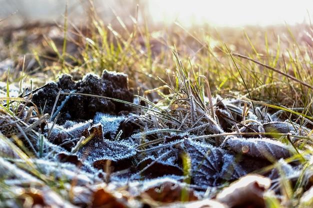 寒い朝の紅葉と草の霜。