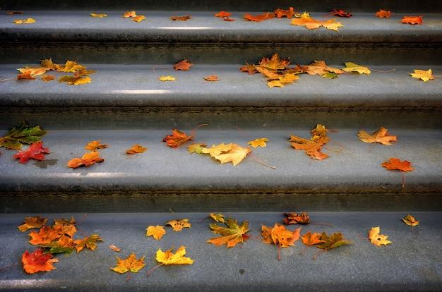 落ちた色のカエデの葉の階段。