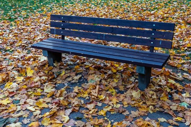 高層の家の中庭にある木製のベンチと紅葉。