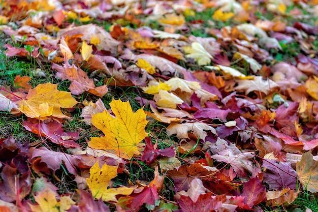 Красочные опавшие листья, лежащие на земле в парке, красивая осень на открытом воздухе