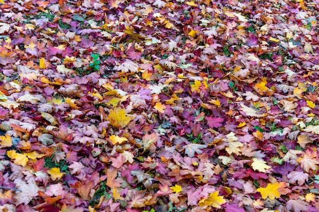 Красочные опавшие листья, лежащих на земле в парке, красивый осенний открытый фон, селективный фокус