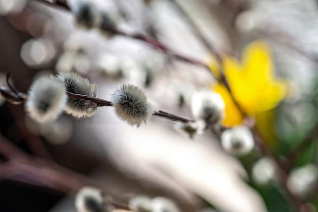 咲く柳の枝。