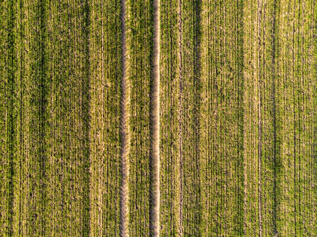 Аэрофотоснимок поля зеленой страны с линиями строки весной со свежей растительностью