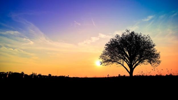 フィールドの木