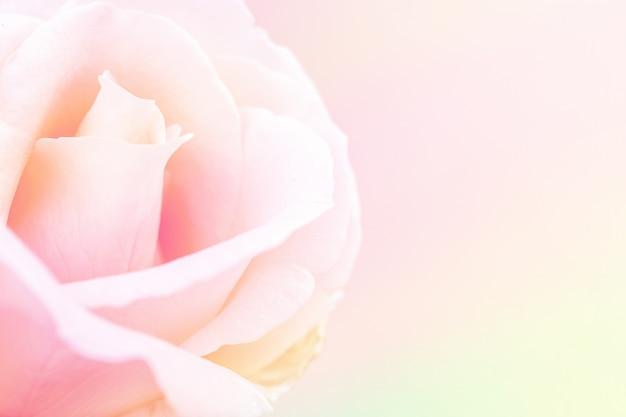 甘いピンクのバラ