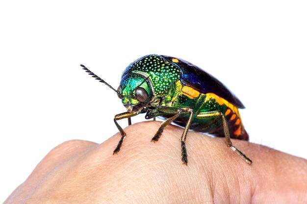 手に緑の足の金属のカブトムシまたは宝石のカブトムシまたは金属の木材ボーリングのカブトムシのイメージ