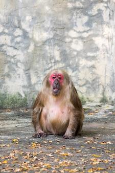 自然に猿のイメージ。野生動物。 (切り株のサル)