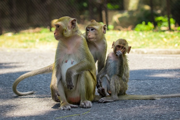 路上に座っている猿の画像。野生動物。