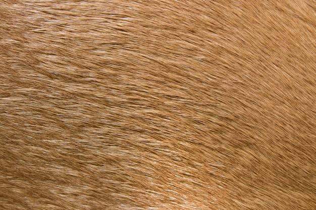茶色の馬の毛皮の背景。馬の毛皮。