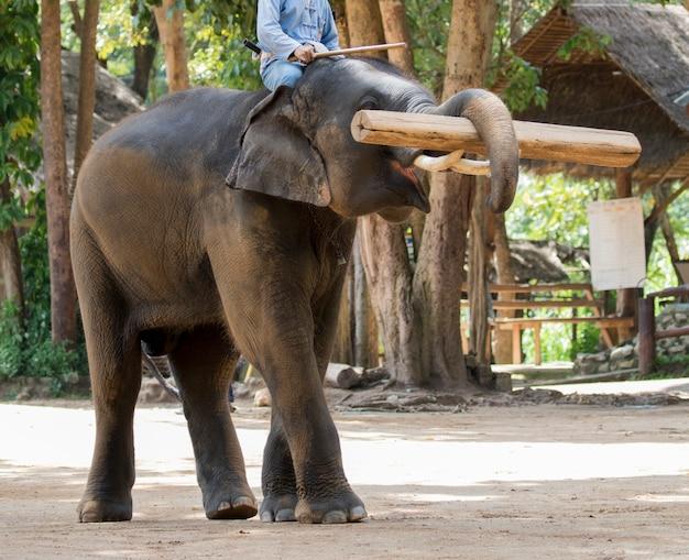 象はタイで材木を持ち上げます。