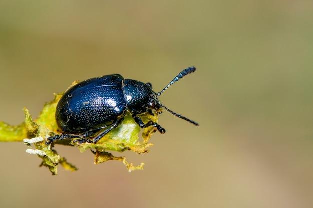 Голубой жук на ветке
