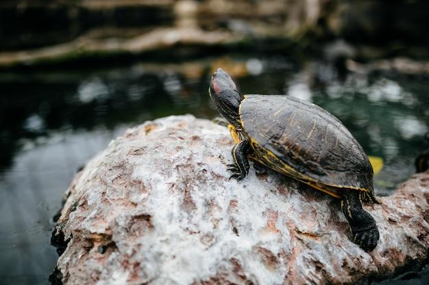 Океанская черепаха