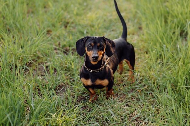 草の上の子犬
