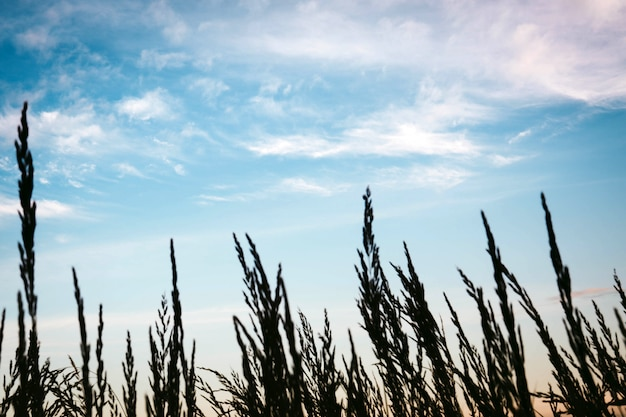 Взгляд травы конца-вверх с величественным облачным небом на предпосылке