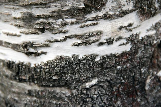 カバの木のテクスチャが閉じる