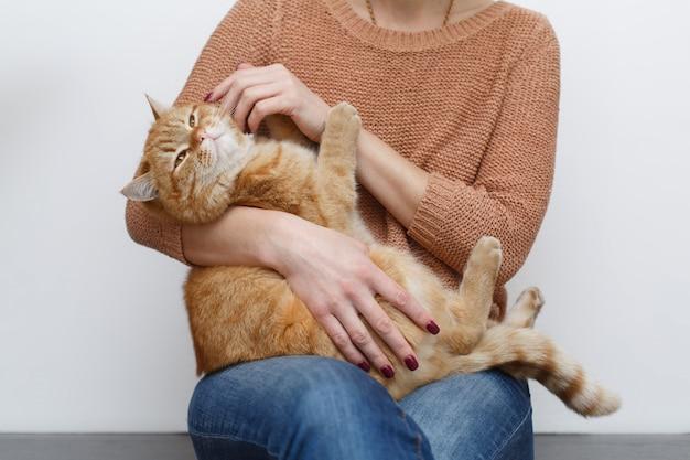 Руки женщины поглаживая здорового красного кота в комнате дома. человеческий уход за руками и поглаживание пушистого кота заделывают. хозяин руки поглаживает забавного кота с довольной мордой. домашние животные и концепция образа жизни