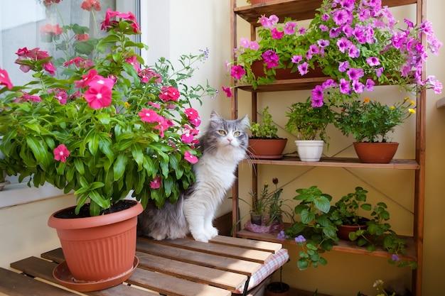 小さなテーブル、椅子、花と猫を備えたバルコニー