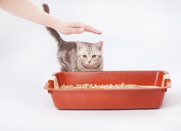 赤いプラスチックごみの横にある小さなスコットランドの子猫