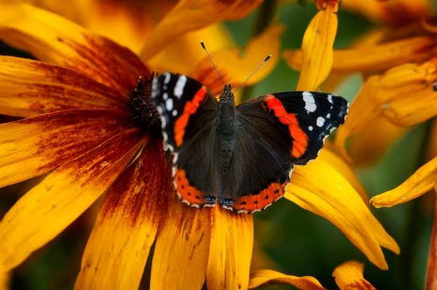 ヴァネッサアタランタ蝶の花