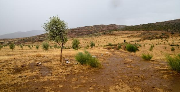 モロッコの雨の自然と丘