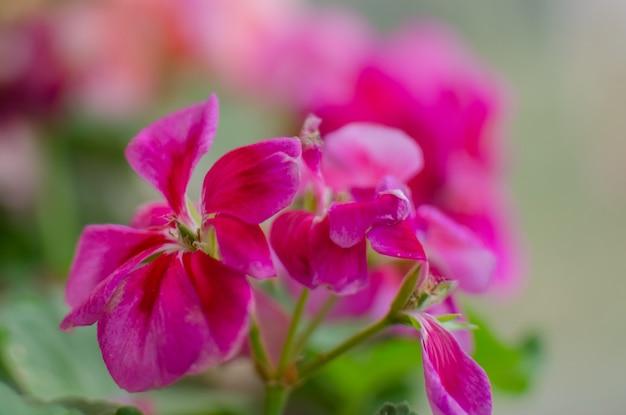 ピンクの花をクローズアップ