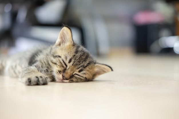 かわいい子猫は床で眠っています。