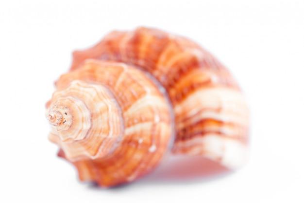 貝のクローズアップ