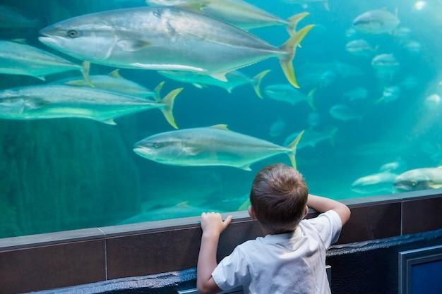 魚の水槽を見ている少年