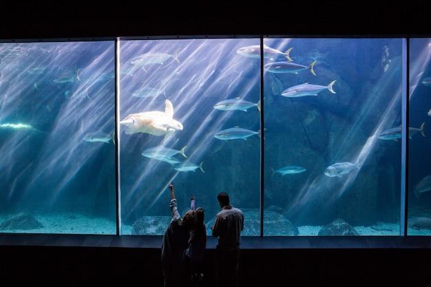 魚のタンクを見ている幸せな家族