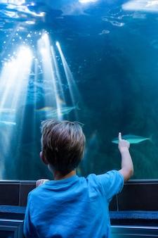 彼の指でタンクに魚を指している若い男