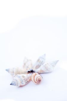 円を形成する貝類