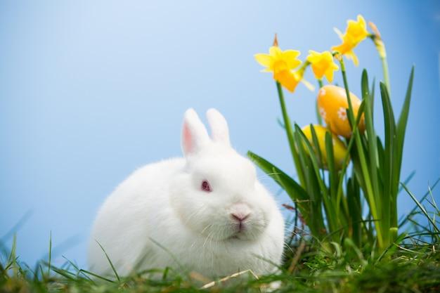 Белый кролик, сидящий рядом с пасхальными яйцами, лежащий на нарциссах