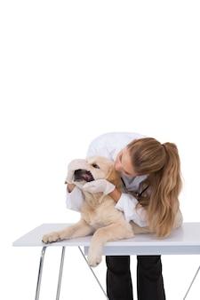 犬の歯をチェックする獣医