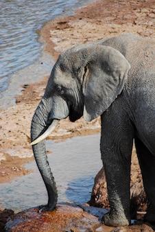 川の近くの象