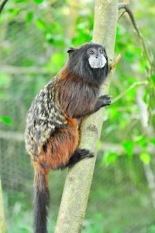 枝にぶら下がっている猿