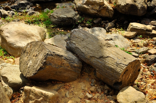 プヤンゴ化石の森