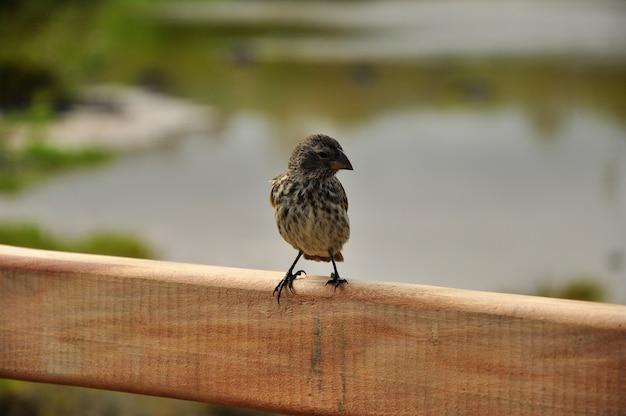 ガラパゴス諸島のビーチで鳥