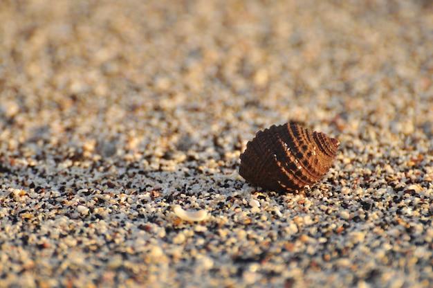 Рак-отшельник в песке