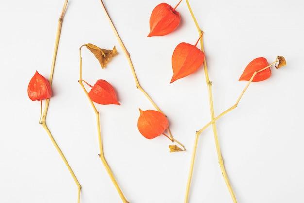 ホオズキの葉の組成