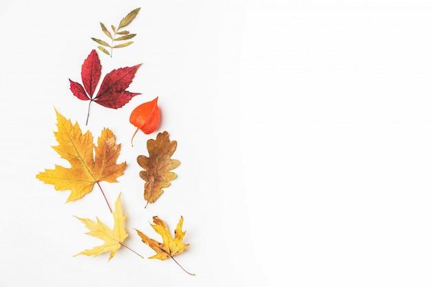 秋の紅葉、秋のコンセプト。