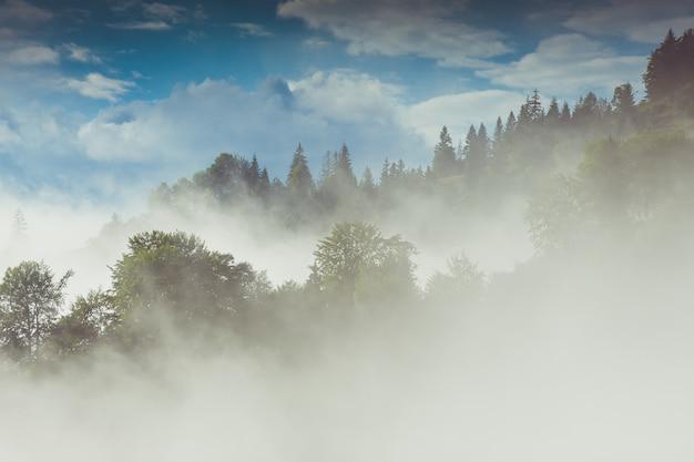 Хвойные деревья в дождливом туманном лесу