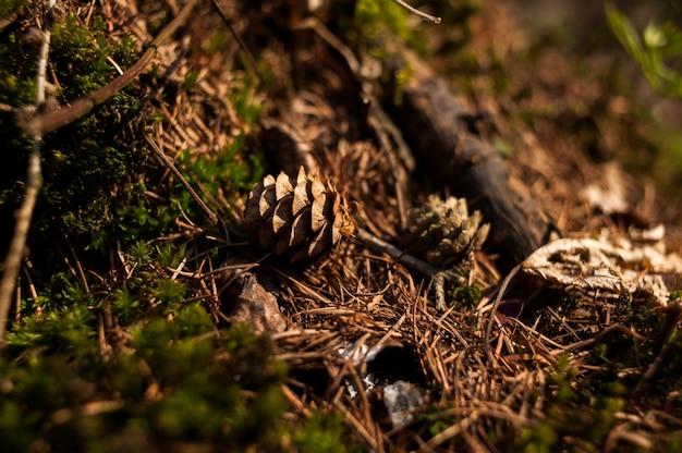 Сухой лиственный лес ранней весной