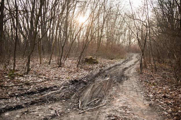 Сухой лес с растительностью ранней весной