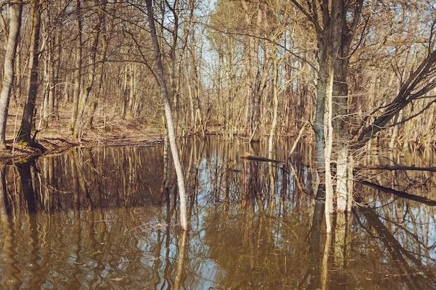 氾濫した春の森